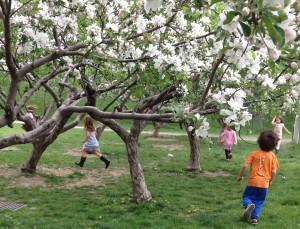 orchardruncrop